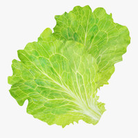 lettuce leaves 3d model