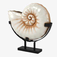3d nautilus seashell model