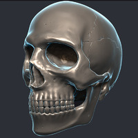 3d model skull teeth jaw