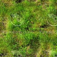 Wild grass 20