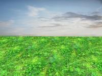 Wild grass 19