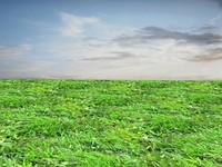 Wild grass 18