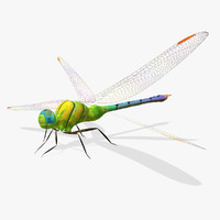dragonfly wings 3d model