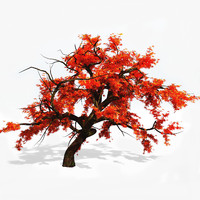 japanese maple tree 3d model