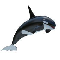 2 killer whale 3d obj