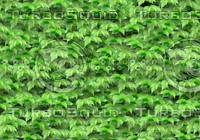 seamless green leave pattern(1)