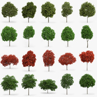 Maple Trees Collection