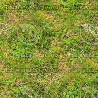 Grass 61