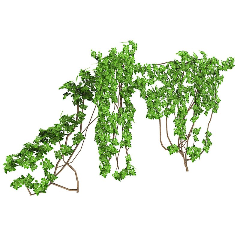 Tree 3ds max Ivy generator Plugin