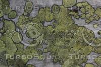 Lichen_Texture_0002