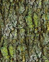 Mossy tree bark 70