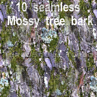 Mossy Tree Bark Collection 7