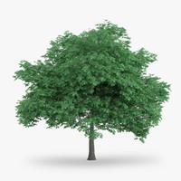 english oak 8 4m 3d model