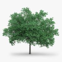 3d english oak 10 2m model