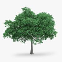 english oak 11 4m 3d model