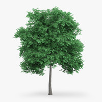 3d model of english oak 6 6m
