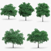 english oak trees 3d model