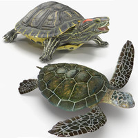 3d rigged turtles