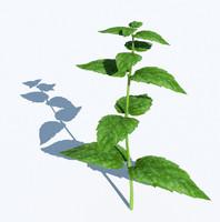 3d herb mint