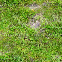 Grass 62