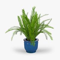 max palm plant