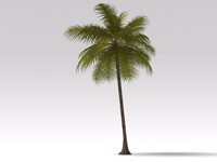 coconut tree max
