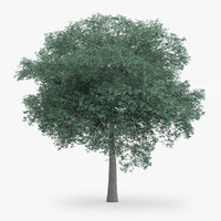 northern red oak 14m 3d obj