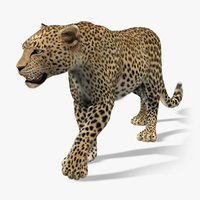 3d leopard fur animation