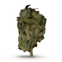 3d cannabis bud model