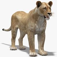 lioness modelled 3d model