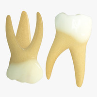 3d model primary molars