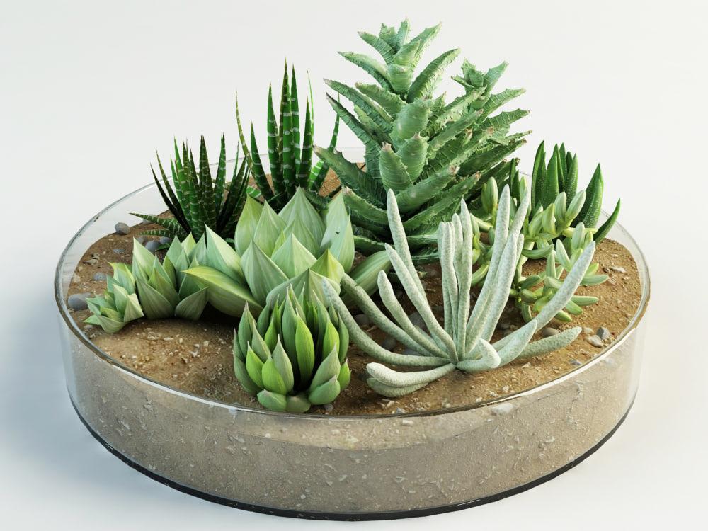 composition succulents 3d model. Black Bedroom Furniture Sets. Home Design Ideas