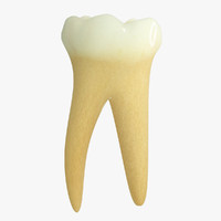 3d primary molar lower