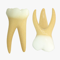 3ds max primary molars