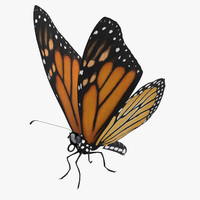 monarch butterfly standing 01 3d model