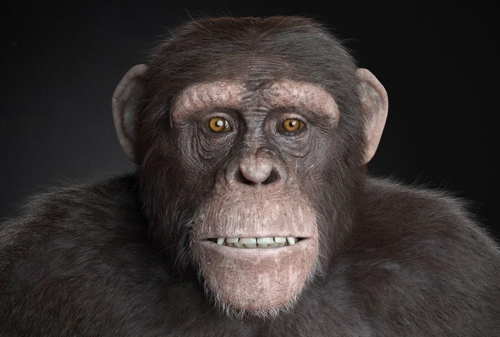 chimp2b.jpg