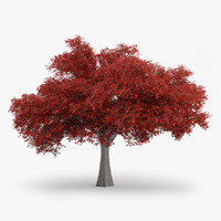 3d model northern red oak 10m