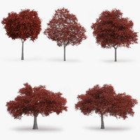 3d model northern red oak trees