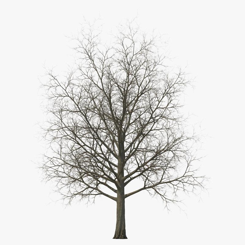 Red Maple Tree Winter 3d model 00.jpg