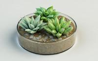 3d plants haworthia turgida vase