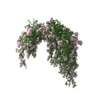 shrub roses 3d obj