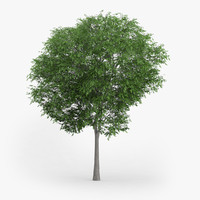 3d model of austrian oak 6 6m
