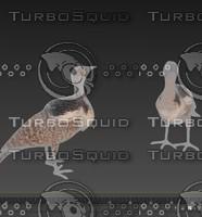 houbara bird