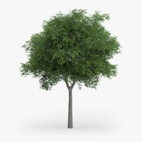austrian oak 7 7m 3d max