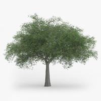 austrian oak 11 4m 3d model