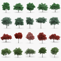 Oak Trees Collection