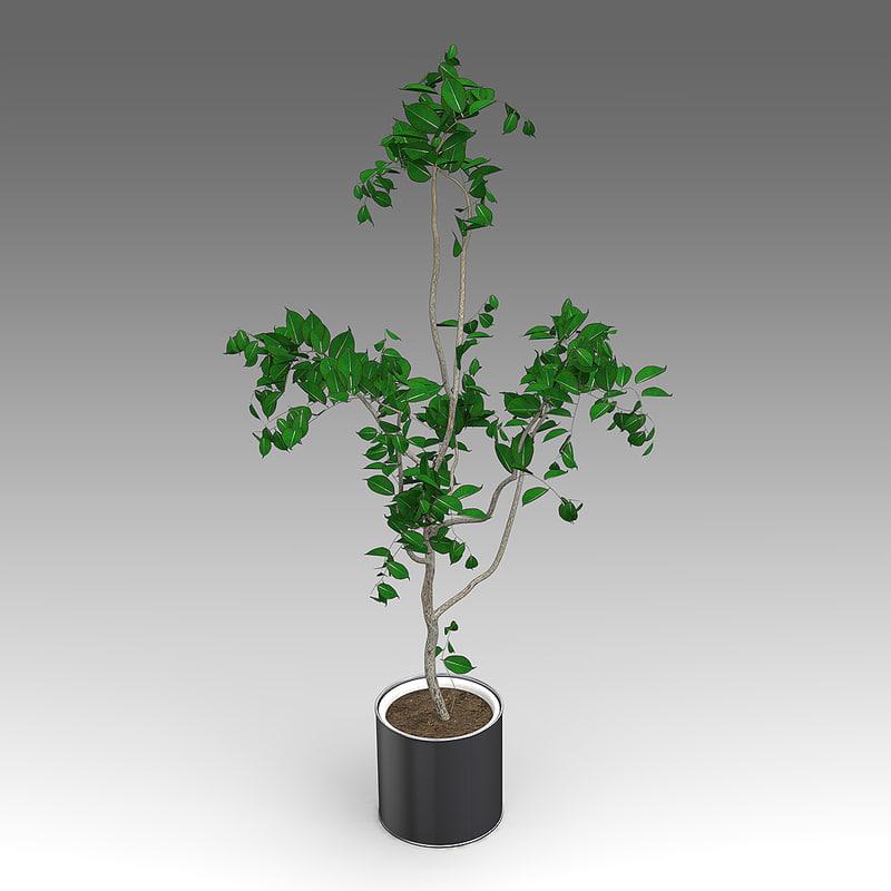house_plants_hpa_011_Tree_01.JPG
