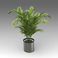 Areca Palm Plant_018