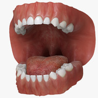 3d model primary dentition gums mouth
