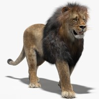 lion fur rigging animation 3d max